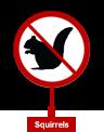 Squirles