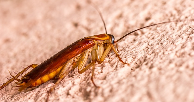 How Roaches Affect Your Home and Life
