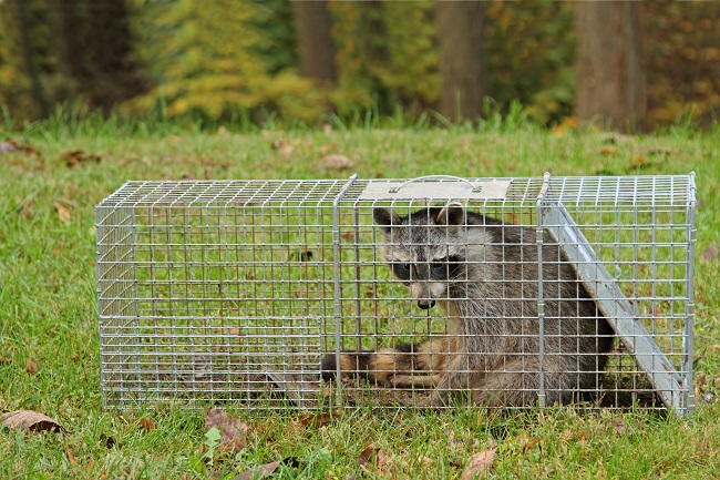 Texas Wildlife Removal Solutions