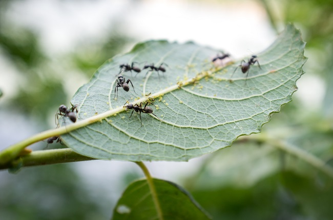 What You Need to Know About Carpenter Ants